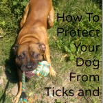 how-to-protect-your-dog-from-ticks-lyme-disease.jpg