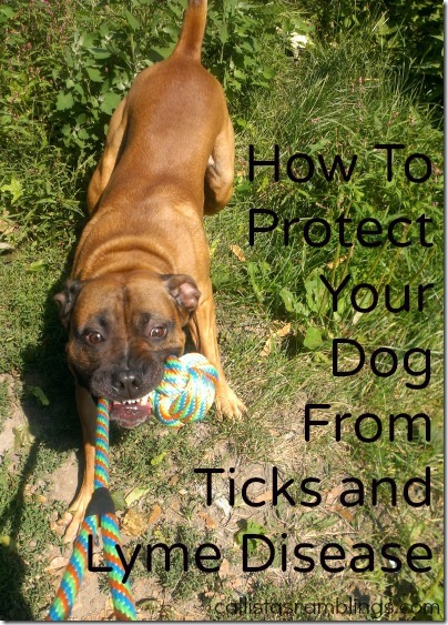 How to Protect Your Dog From Ticks and Lyme Disease