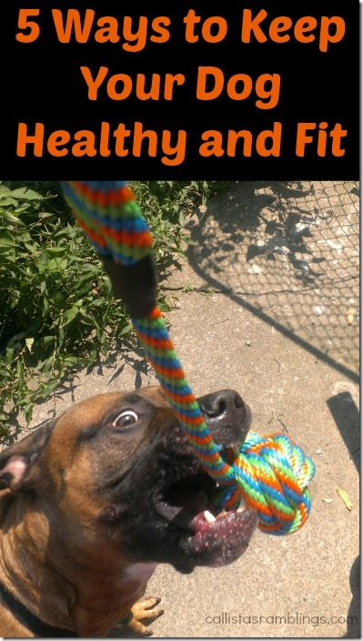 5 Ways to Keep Your Dog Healthy and Fit | Callista's Ramblings