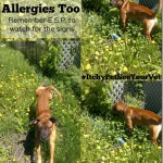 Dogs Get Seasonal Allergies Too #ItchyPetSeeYourVet