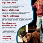 The Cold Weather and Pets #PetWellnessMonth