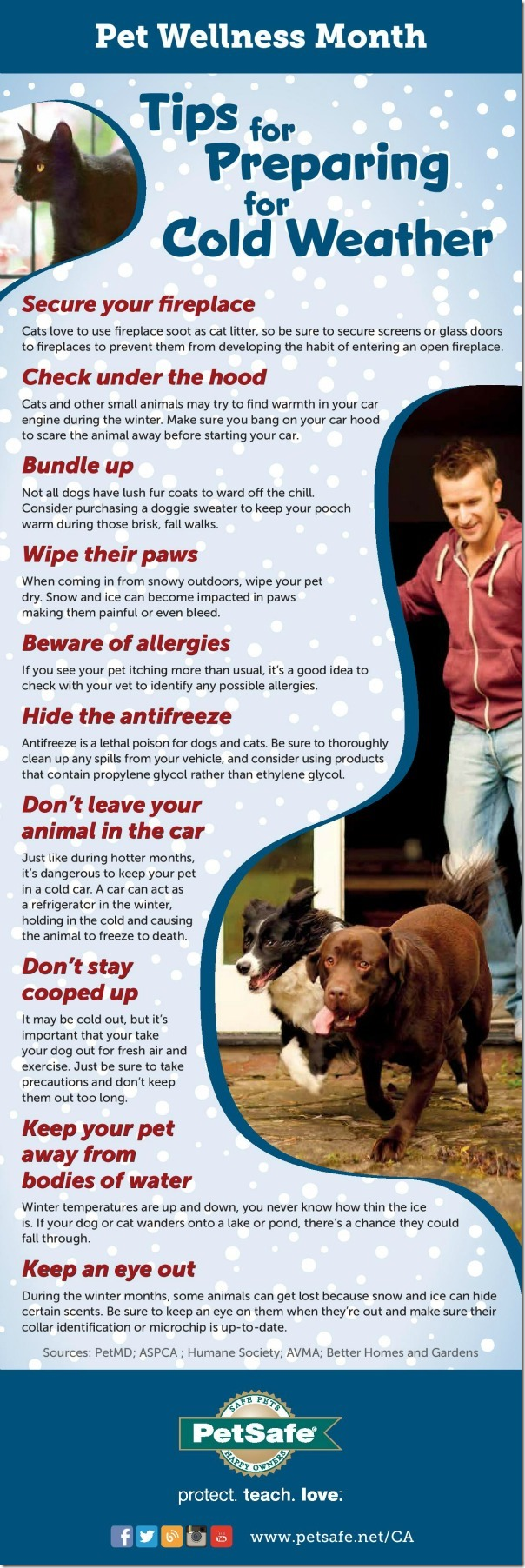 Pet Wellness Month Cold Weather and Pets Infographic from PetSafe
