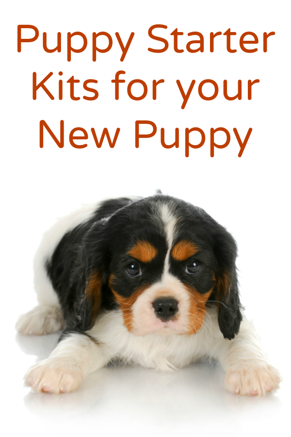 Puppy Starter Kits for Your New Puppy