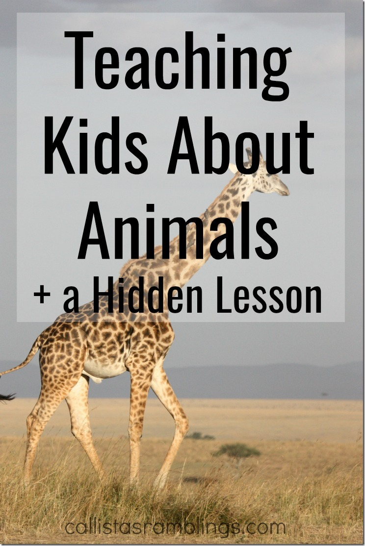 Teaching Kids About Animals + a Hidden Lesson - How to Turn these Books into a full lesson and a bonus lesson on Being Unique