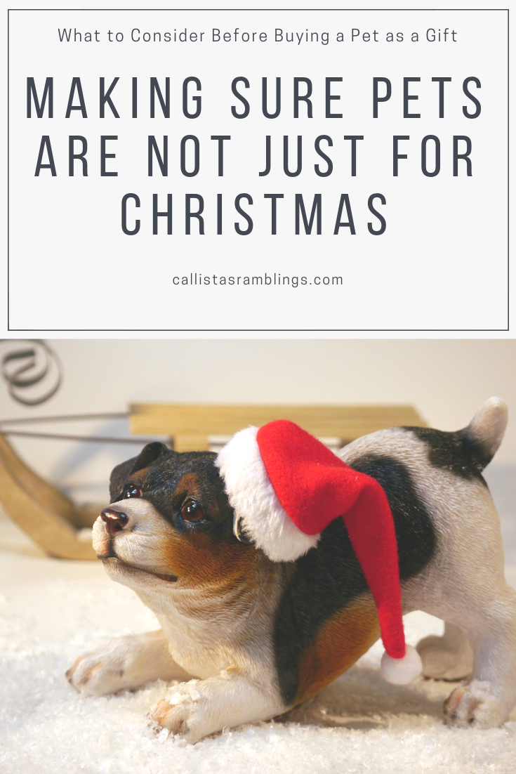 Making Sure Pets Are Not Just For Christmas: What to Consider Before Buying a Pet as a Gift